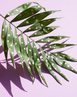 ドッティ熱帯シダの葉の高いビュー