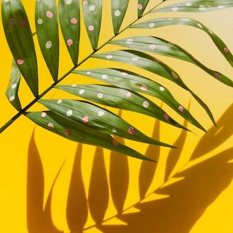 熱帯のシダの葉と影の半分