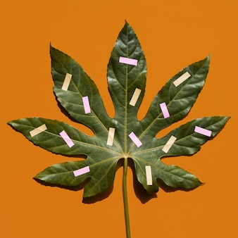 クローズアップ塗装栗の葉のトップビュー