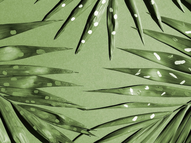 モノクロのシダの葉のトップビュー
