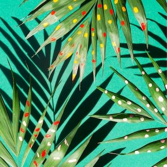 さまざまなシダの枝に影のトップビュー