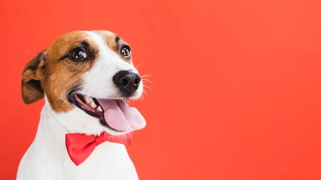 赤の弓のコピースペースで遊び心のあるかわいい犬