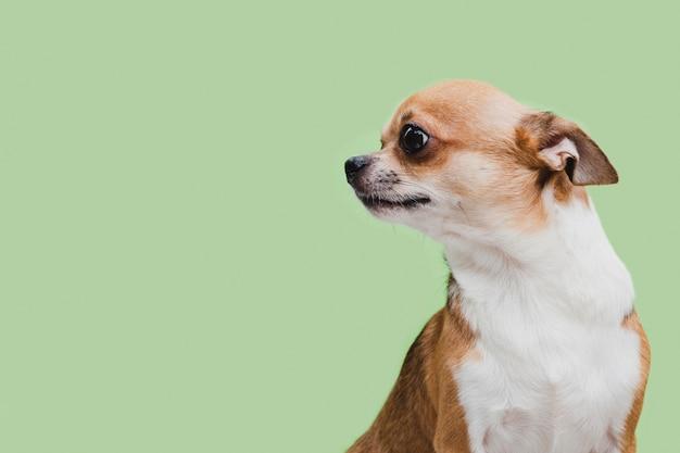 コピースペースを離れて見てサイドビュー悲しい犬