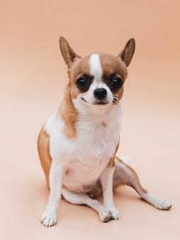 耳を傾けて座っているスマイリー犬