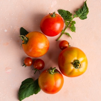 Вид сверху незрелых садовых помидоров