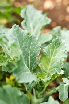 Макро вкусный салат из сада