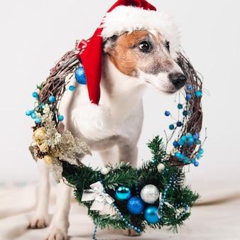 クリスマスの装飾の帽子をかぶっているかわいい犬