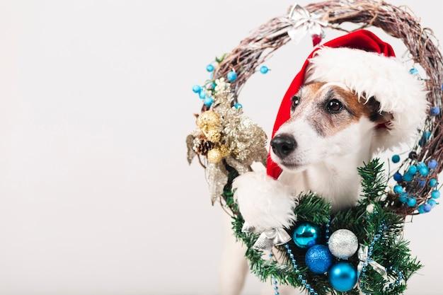 クリスマスの装飾と帽子をかぶっているかわいい犬