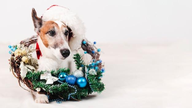 クリスマスの装飾と帽子をかぶっている犬