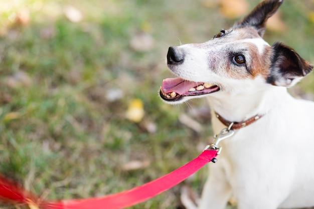 リーシュと公園でかわいい犬