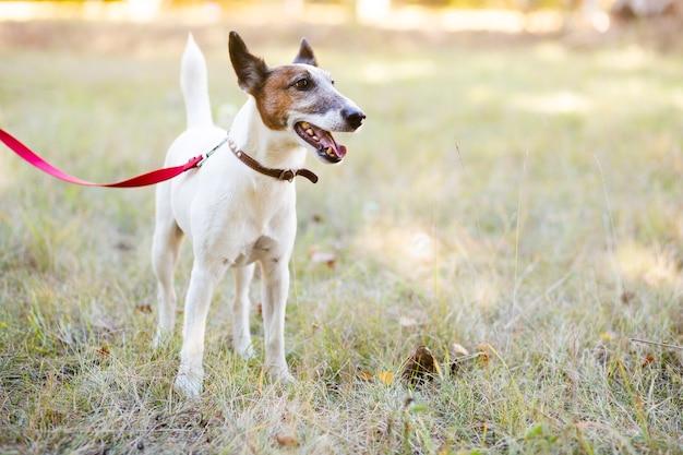 リーシュと公園に立っている犬