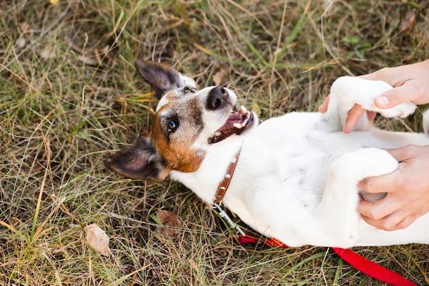 リーシュと公園で寝返り犬