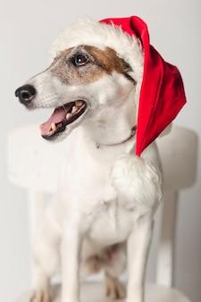 サンタの帽子をかぶっているかわいいジャックラッセル