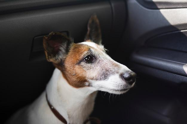 Милая собака сидит в машине