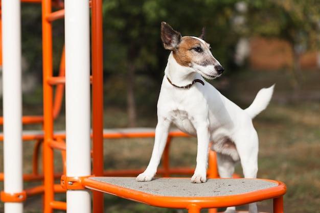 子供の公園でかわいい犬
