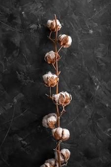 正面の綿繊維の枝