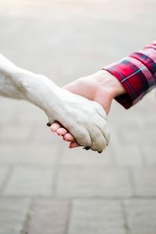 Женщина крупного плана держа лапку собак