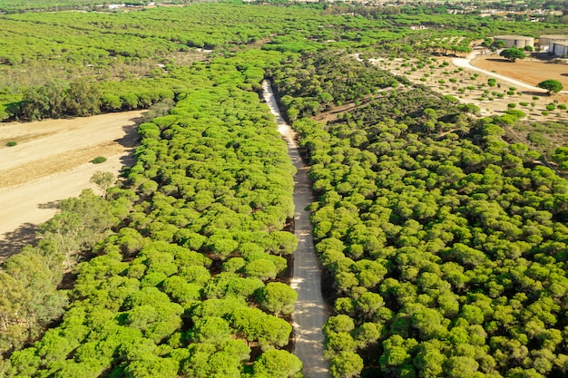 Воздушный панорамный пейзаж вид дороги в лесу