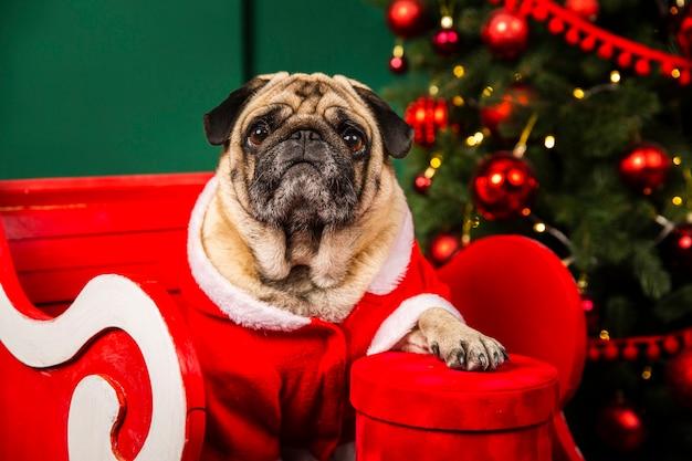 Милая собака помогает санта на рождество
