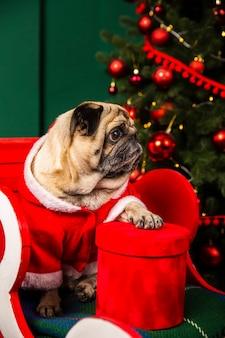 サンタの衣装を着てハイアングル犬