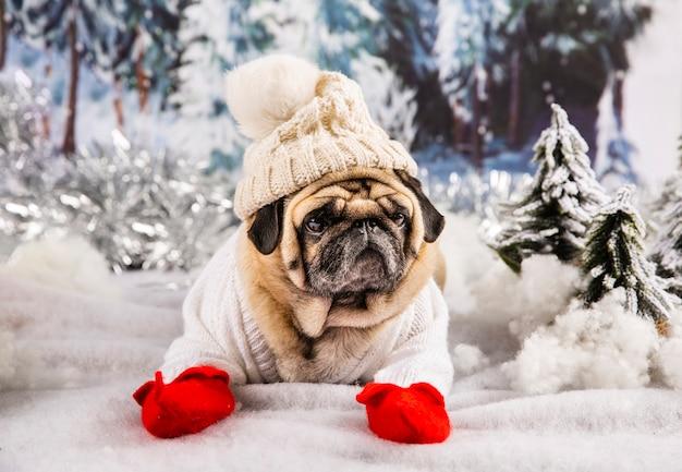 セーターの帽子と手袋を身に着けているかわいいパグ