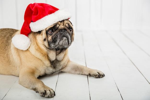 サンタの帽子をかぶっているかわいいパグ