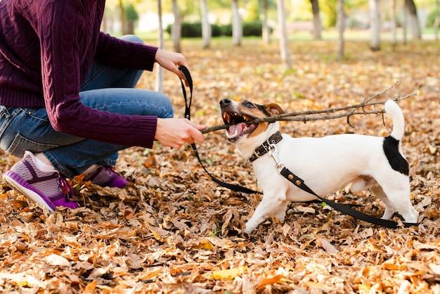 Милая маленькая собака играет с женщиной