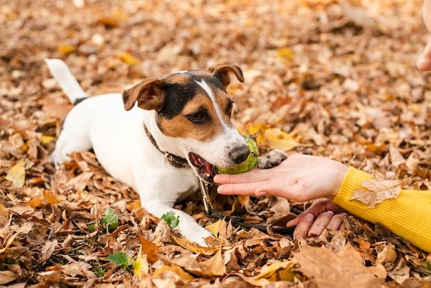 公園のクローズアップの愛らしいペット