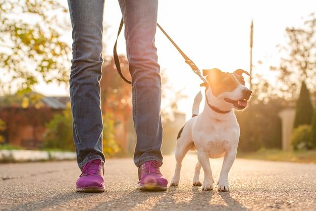 Милая маленькая собака с его владельцем на открытом воздухе