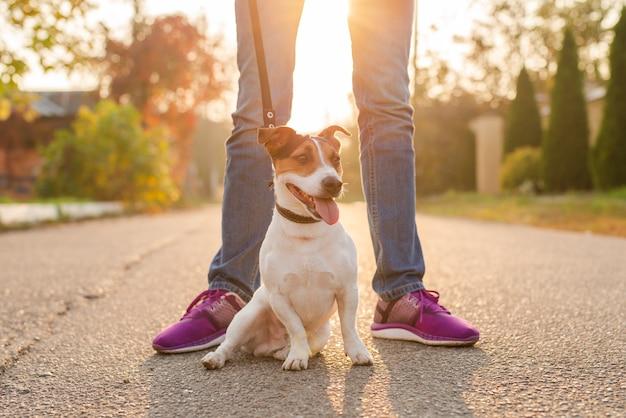 愛らしい犬の屋外の肖像画
