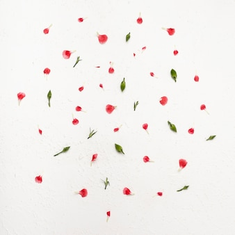 カラフルな花びらのフラットレイアウトフラワーアレンジメント