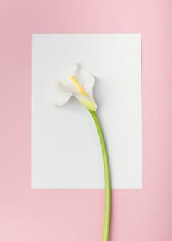 白い空の紙カードのトップビュー白いオランダカイウユリの花