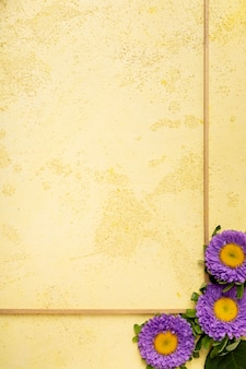 新鮮な紫のヒナギクとクローズアップミニマリストフレーム