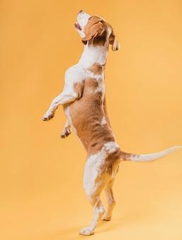 Счастливая собака стоит на задних лапах