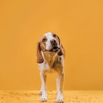 面白い顔を作る正面犬