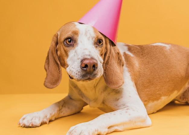 パーティの帽子をかぶっているかわいい犬
