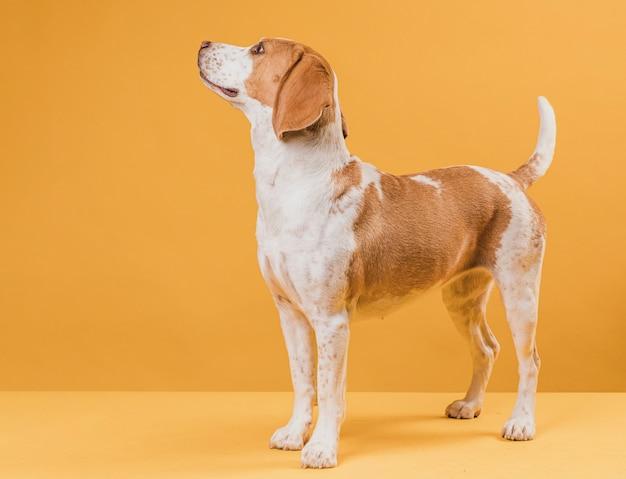 誇りに思って美しい犬の肖像画