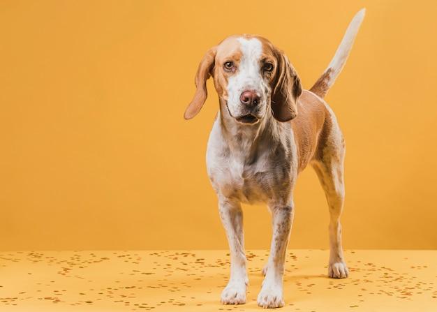 Вид спереди очаровательная собака смотрит на фотографа
