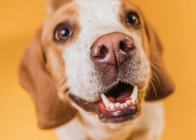 Вид сверху очаровательная собака с красивыми глазами