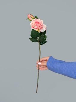 美しいバラを保持している女性