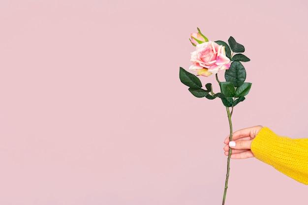 コピースペースとバラを持っている手