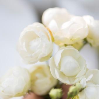 自然な白いバラのクローズアップ