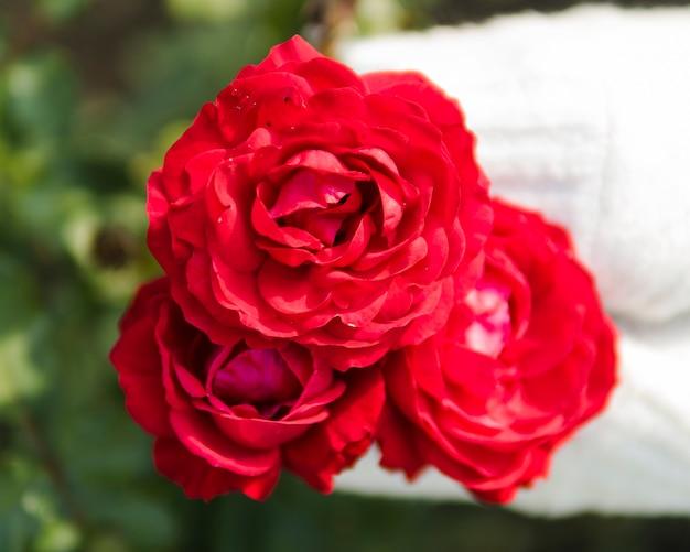 赤いバラの花束のクローズアップ