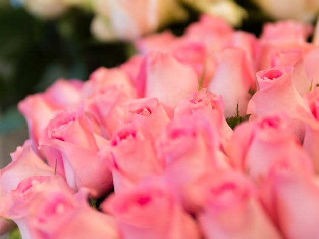 Нежный букет розовых роз крупным планом