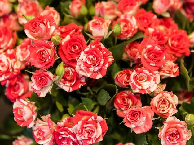 ユニークな赤いバラの花束をクローズアップ