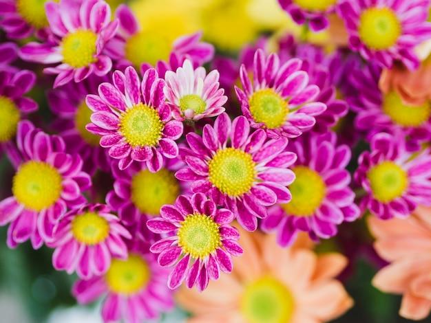 Закройте фиолетовые цветы