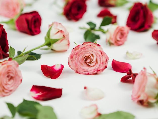 ロマンチックなバラの品揃えのクローズアップ