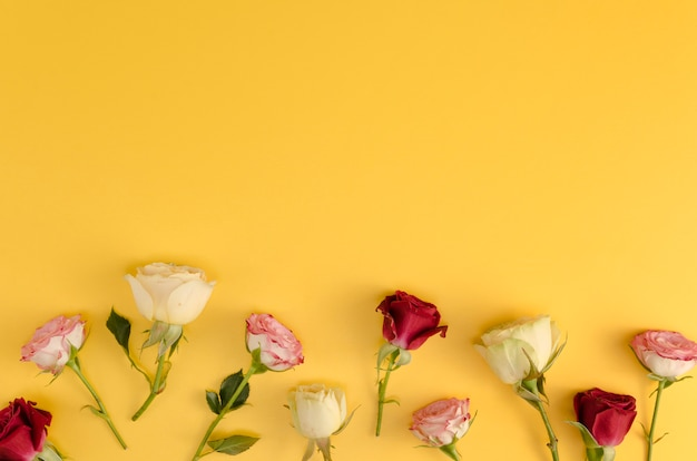 黄色の背景に新鮮なバラ