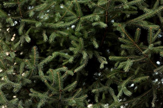 雪で松の木