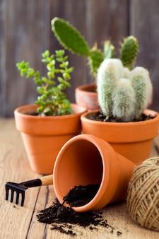 クローズアップ植木鉢とサボテン